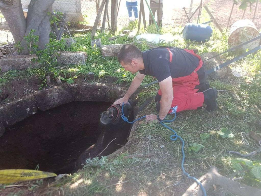 🇫🇷 Frontignan (34) : Sauvetage d'un cheval tombé dans un puits
