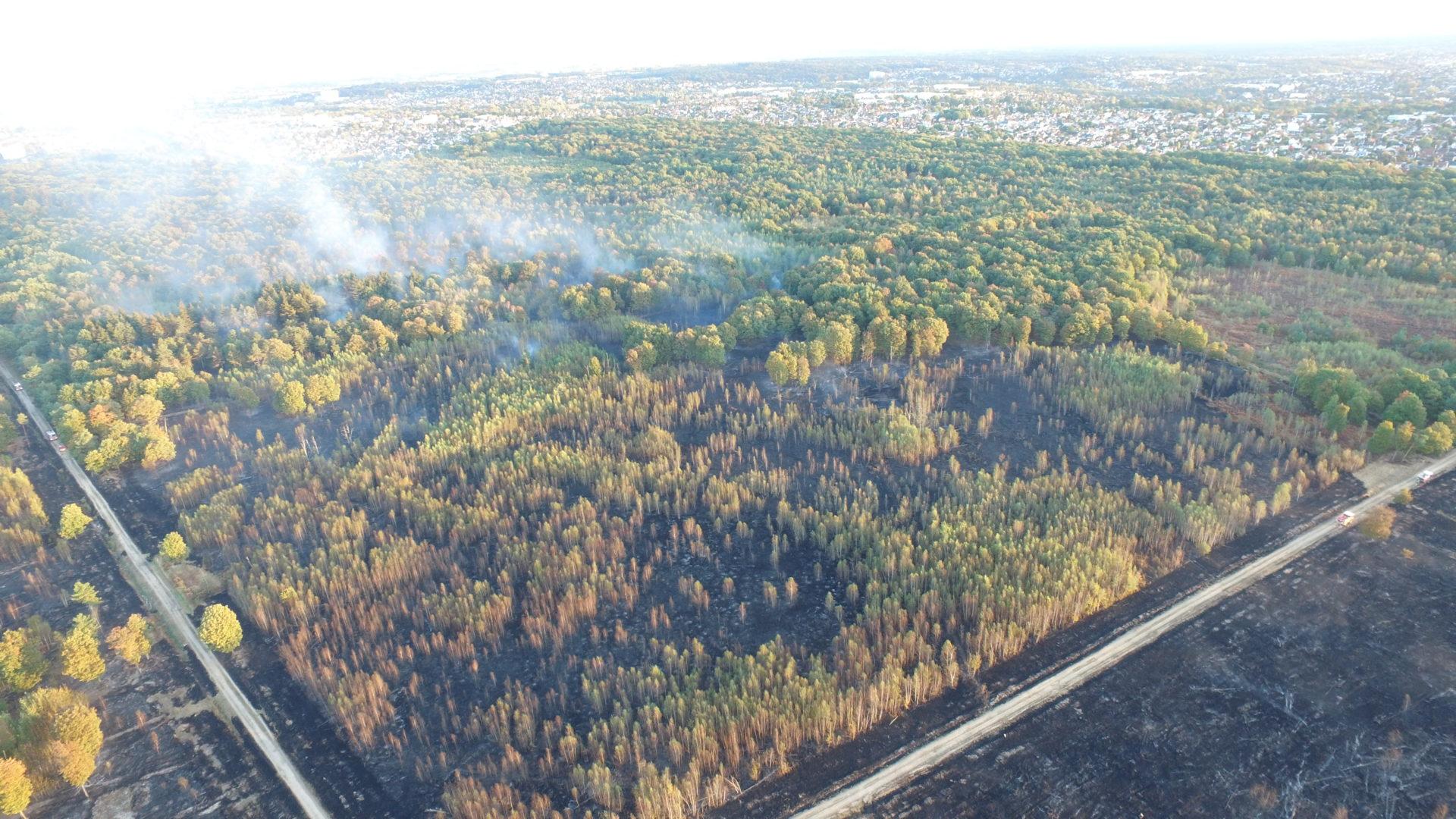 🇫🇷 Sénart (91) : 60 hectares de forêt ravagés par le feu